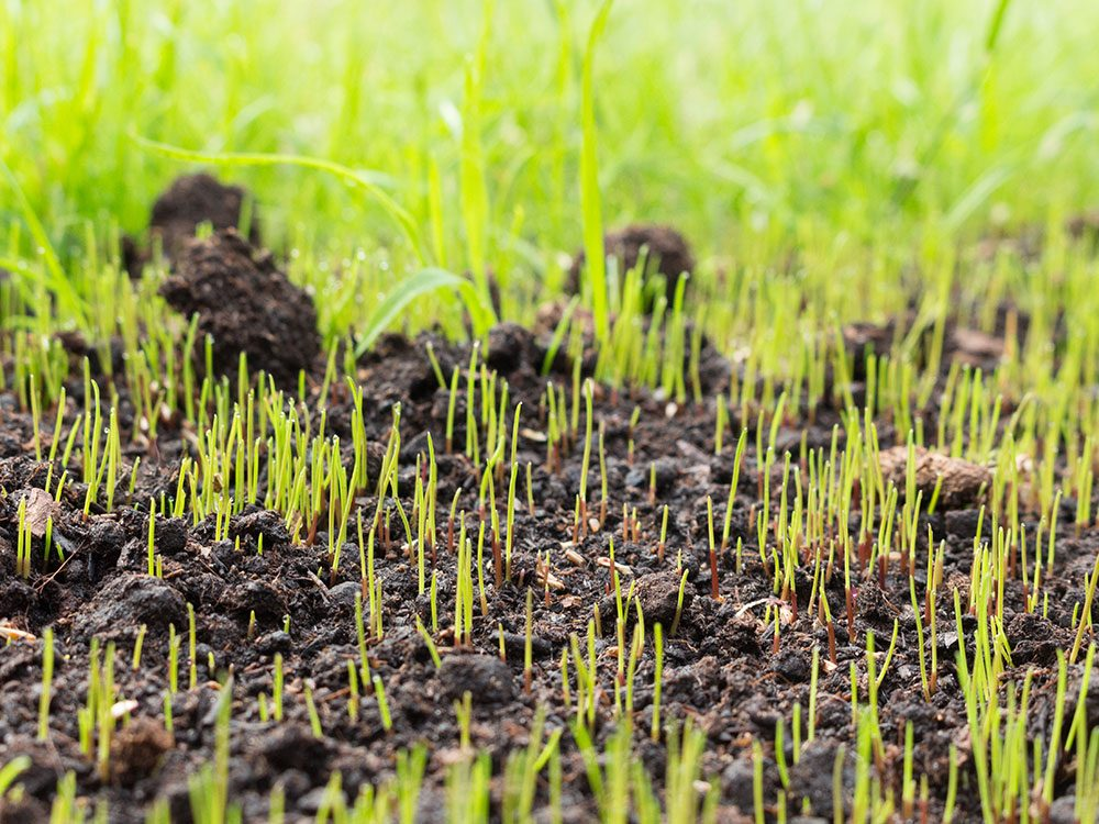 Use coffee cans as lawn seeders