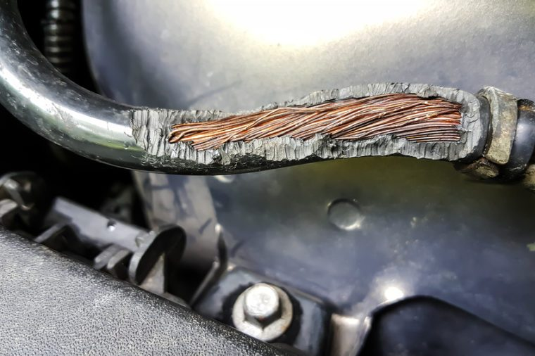 Rats damaged this car