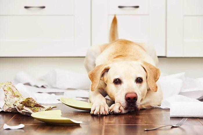 Dog after trashing house