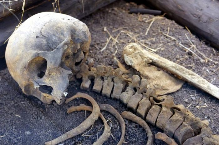 Ancient human skull and bones. Reconstruction of the burial site.