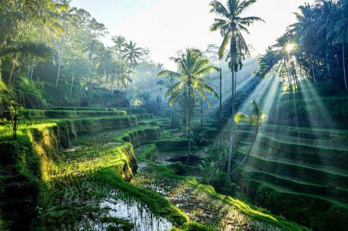 Rice TerracesBali