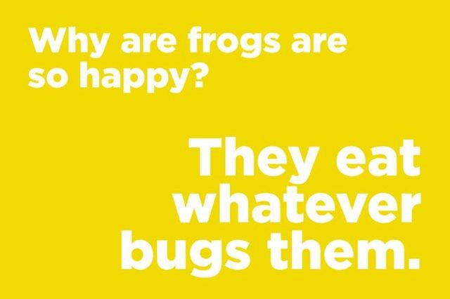 frogs happy