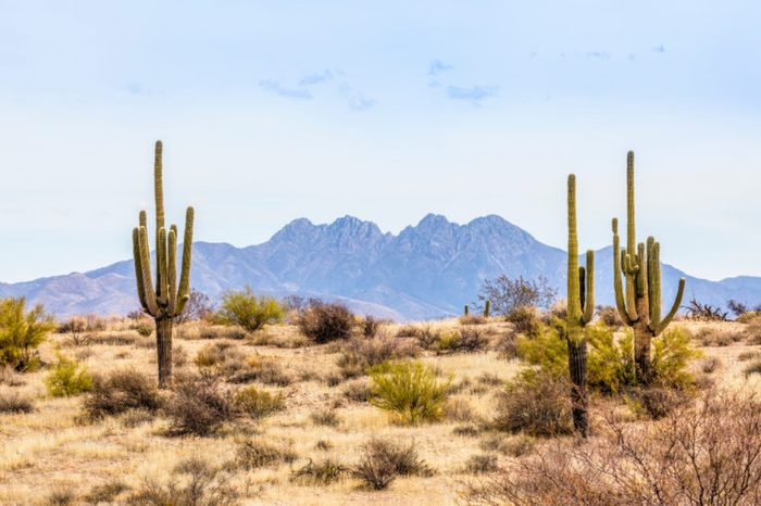 Four Peaks, a prominent landmark of the Mazatzal Mountains on the eastern skyline of Phoenix, Arizona, is framed by tall saguaro cacti in the desert.