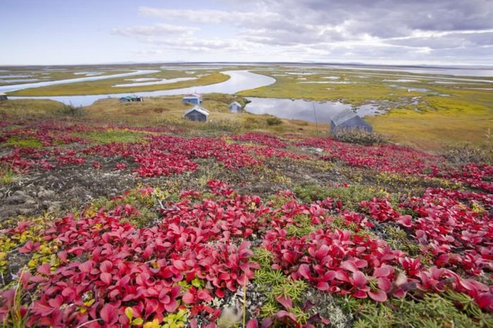 Inuit summer huting camp at the mouth of the sepentine river near Shishmaref, a tiny island between Alaska and Siberia in the Chukchi sea which is home to around 600 inuits or eskimos.