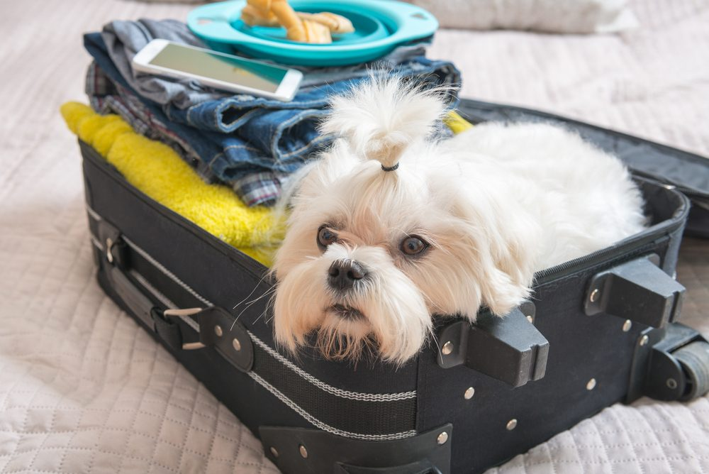 Cute dog playing in suitcase