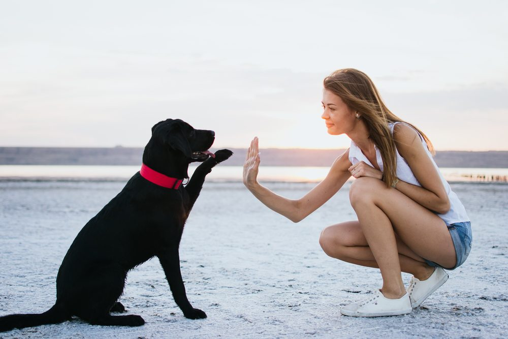 High-five between dog and attractive owner