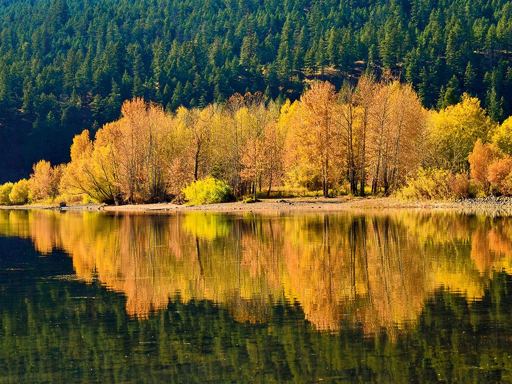 Autumn in Canada - yellow trees on lake