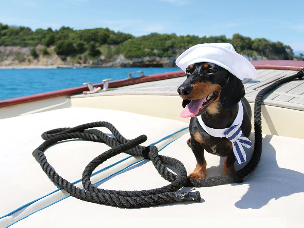 Crusoe the Celebrity Dachshund in Cinque Terre, Italy
