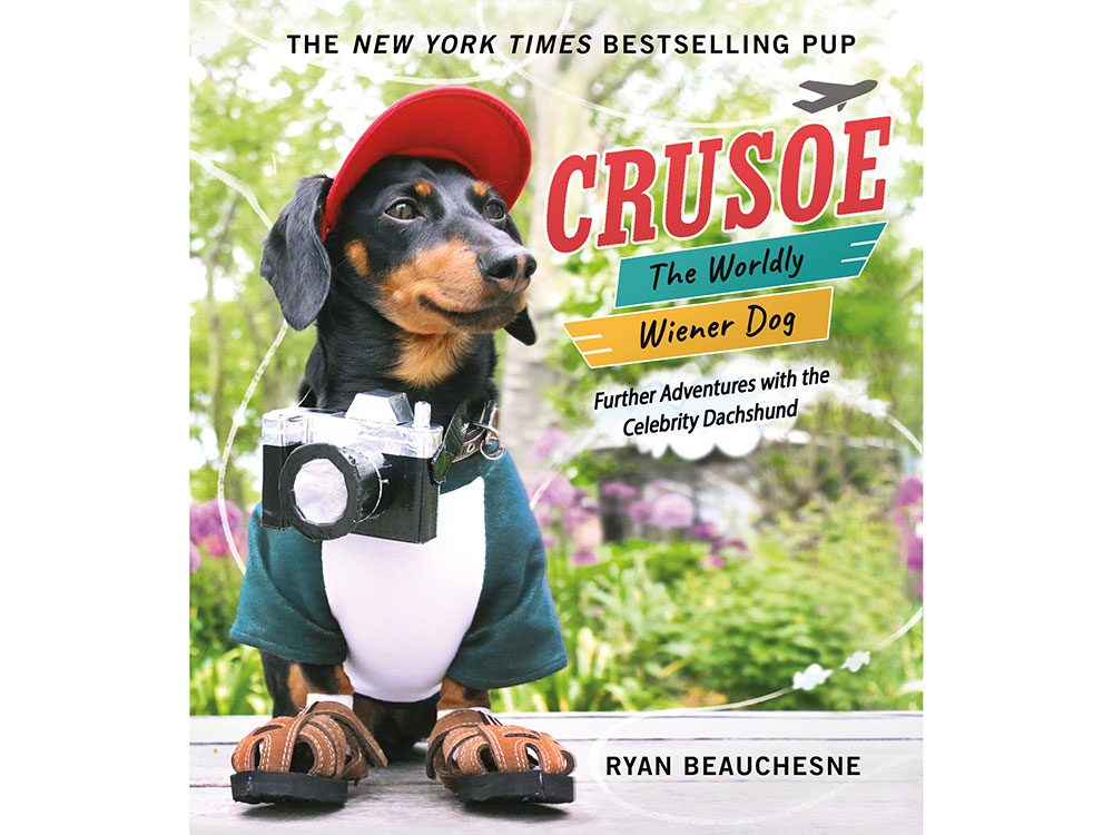 Crusoe the Worldly Wiener Dog