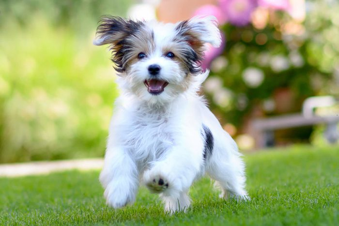 Adorable puppy running