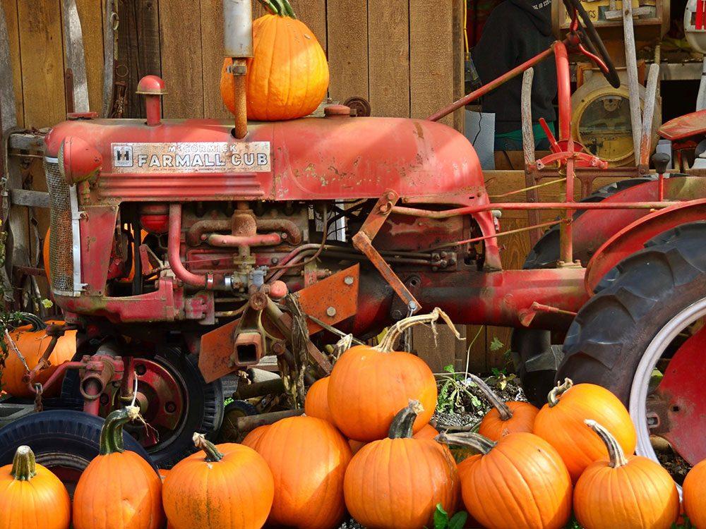 Roadside farm selling pumpkins