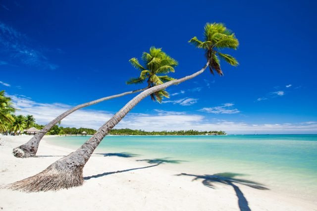 Palm trees hanging over stunning lagoon with blue sky