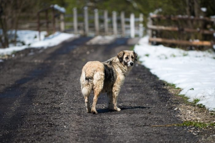 Stray dog on a rural road