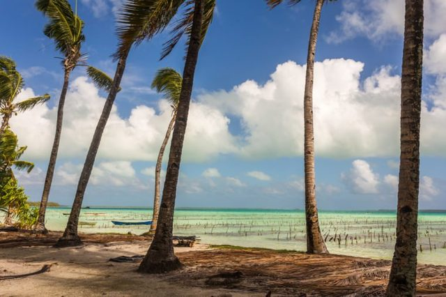 View from the shore through palm trees to old fishing boats in a shallow lagoon with turquoise water, Fanning Island, Kiribati Republic