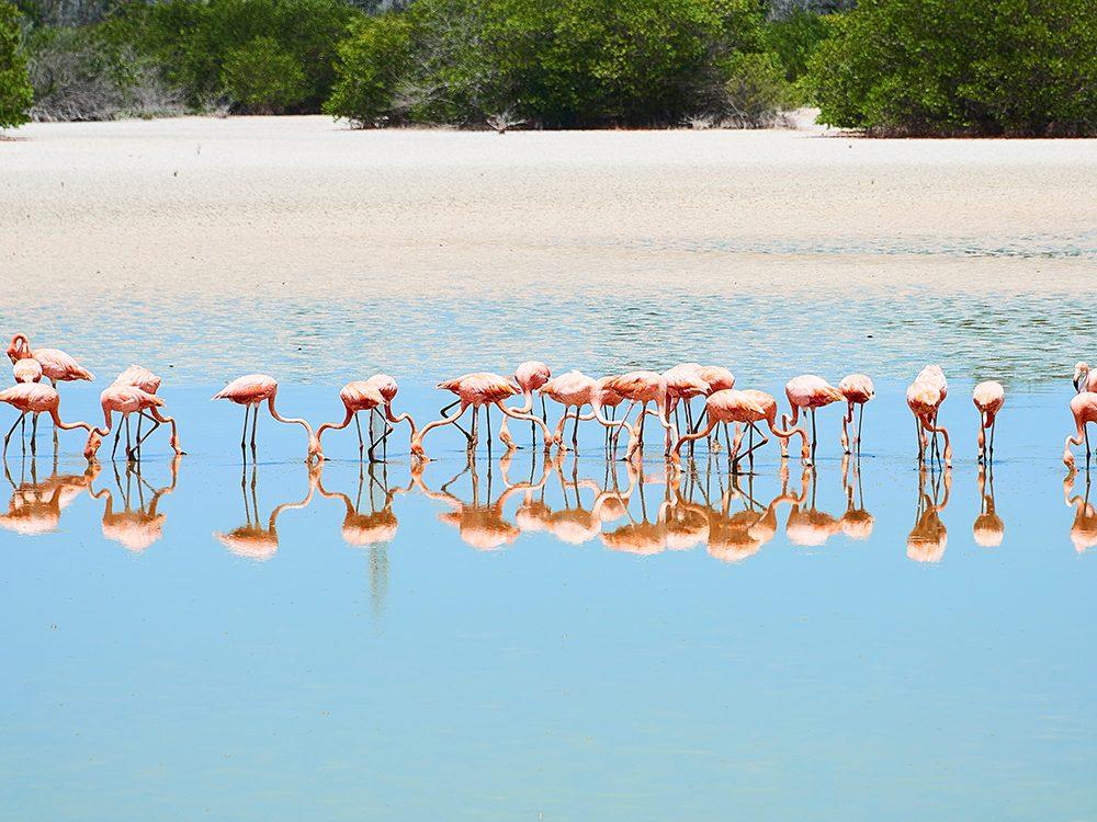 Best small islands: Cayo Guillermo, Cuba