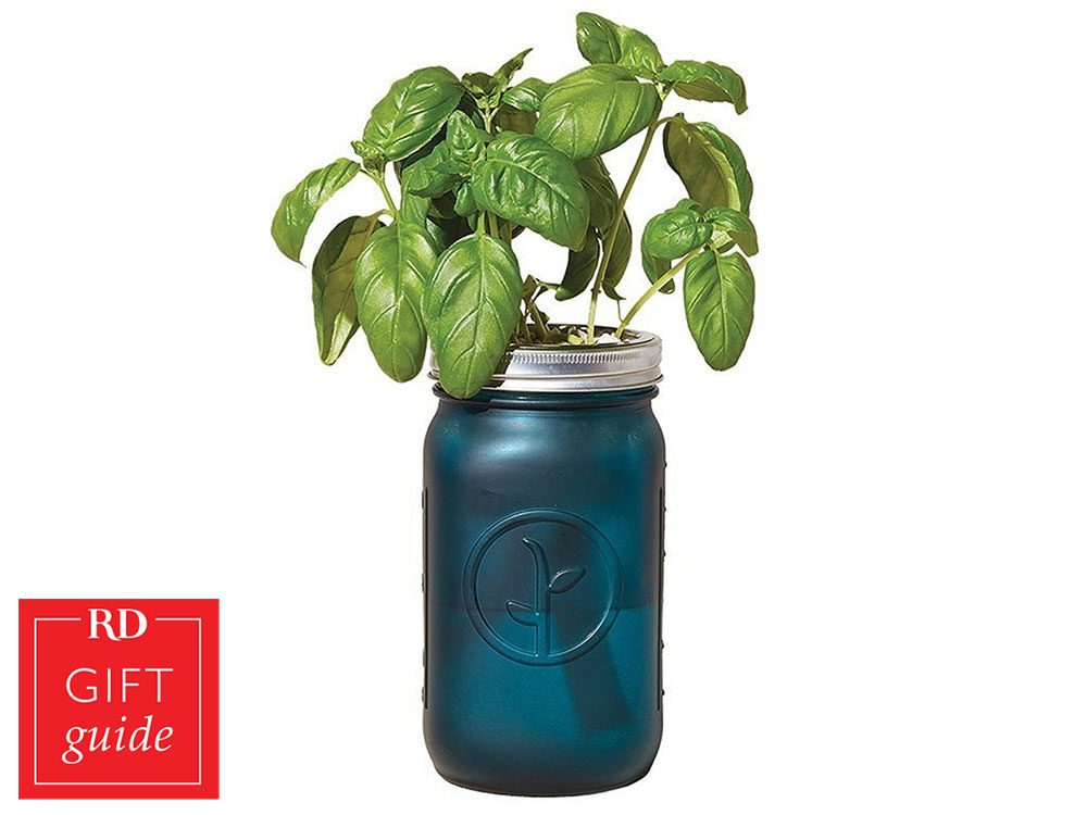 Canadian gift guide - Chapters Indigo herb growing kit mason jar