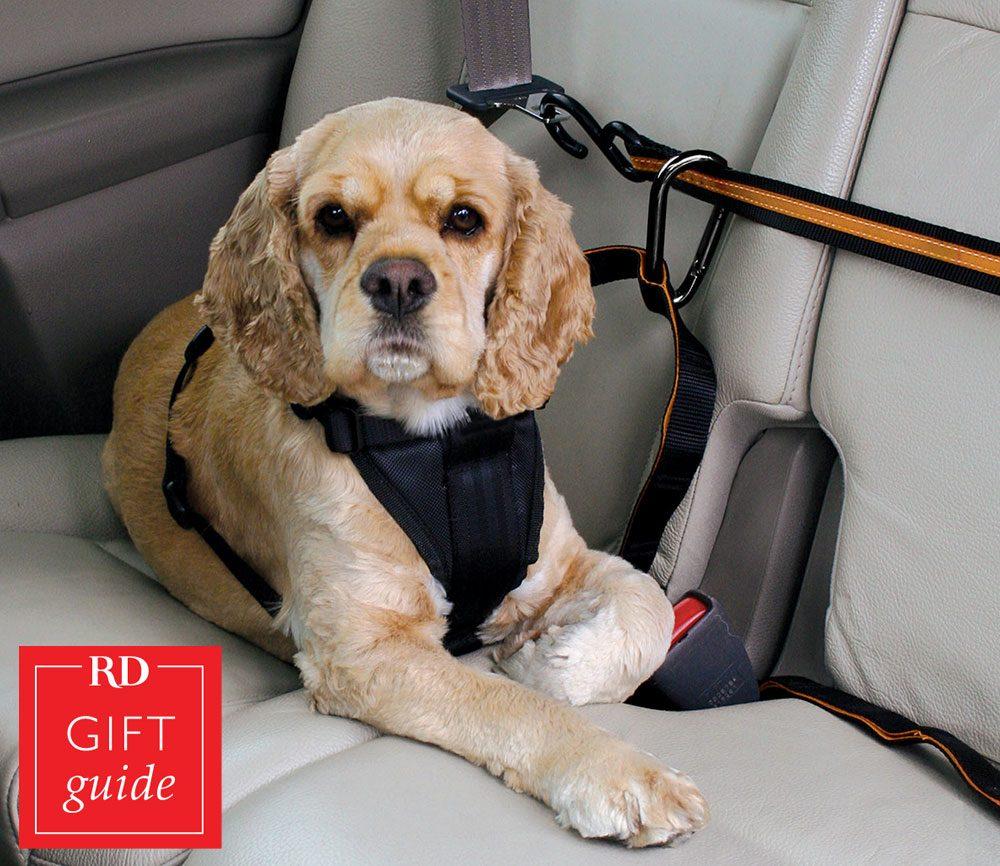 Canadian gift guide - Kurgo Auto Zip Line PetSmart