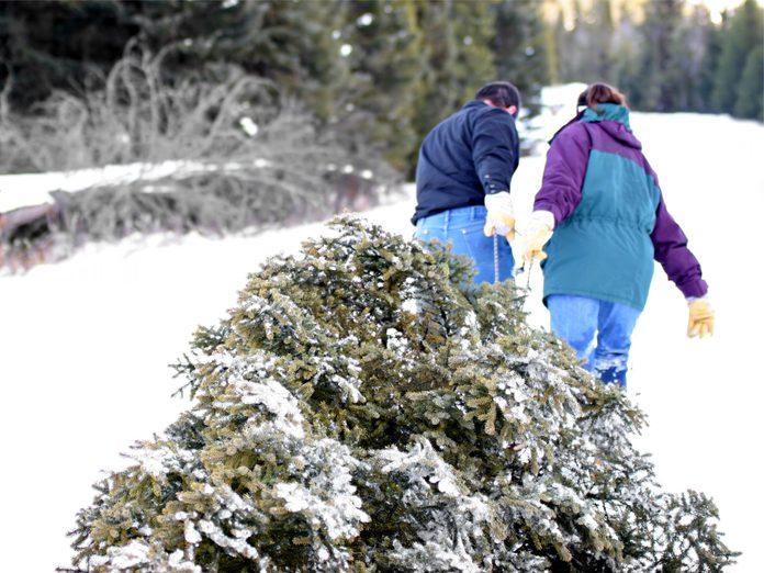 Couple pulling Christmas tree