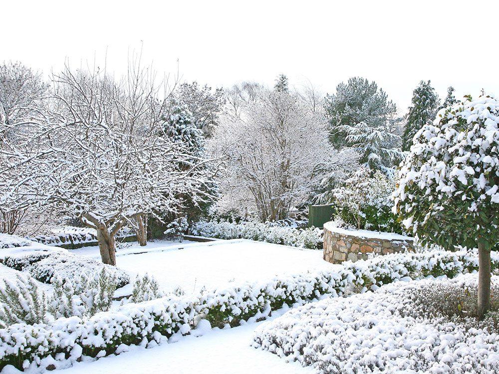 Snowy winter garden