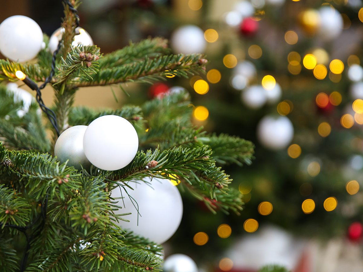 Uses for Christmas trees after the holidays - Decoration on branches