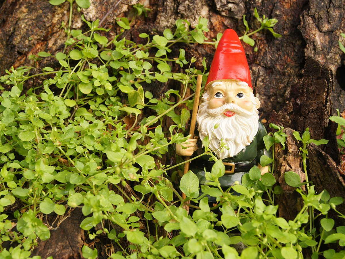 Best jokes of all time - garden gnome