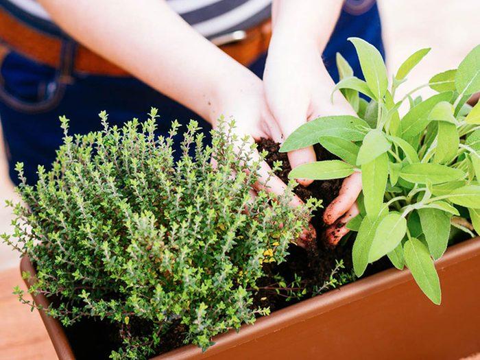 Best plants for urban gardening