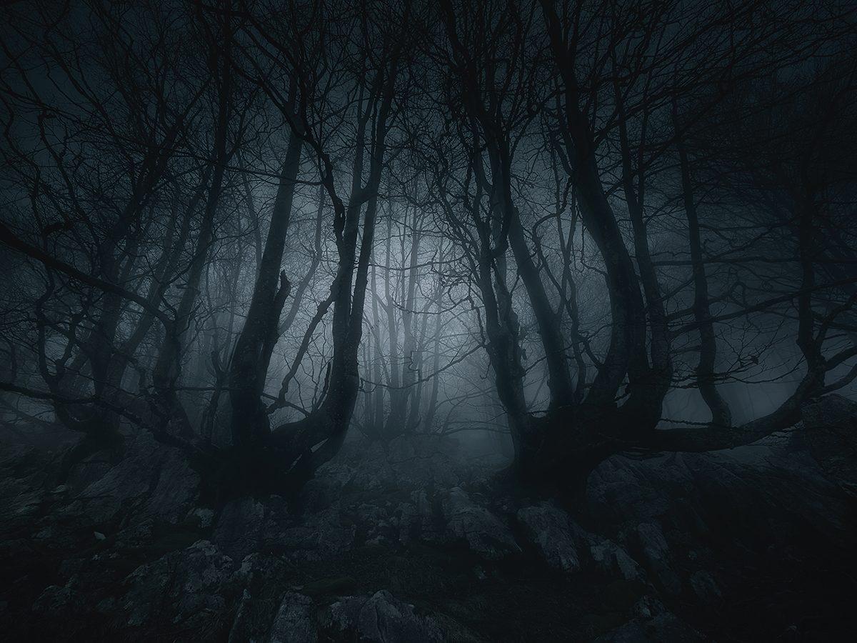 Best Reader's Digest jokes of all time - dark creepy forest
