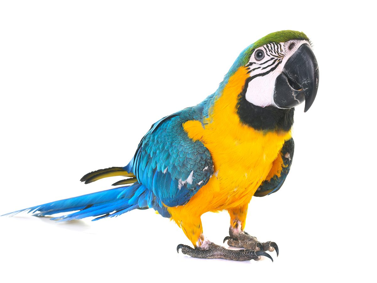 Best Reader's Digest jokes of all time - parrot