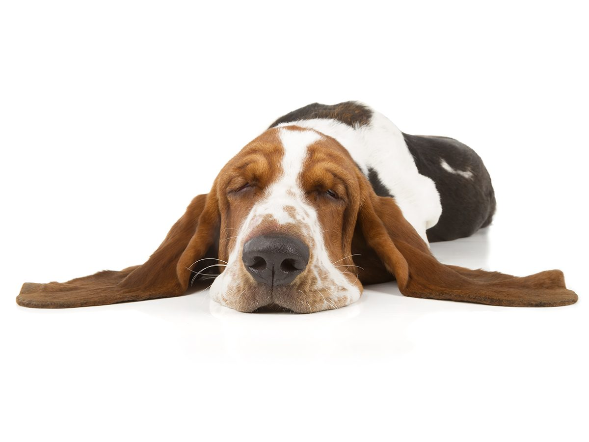 Best Reader's Digest jokes of all time - sleeping hound