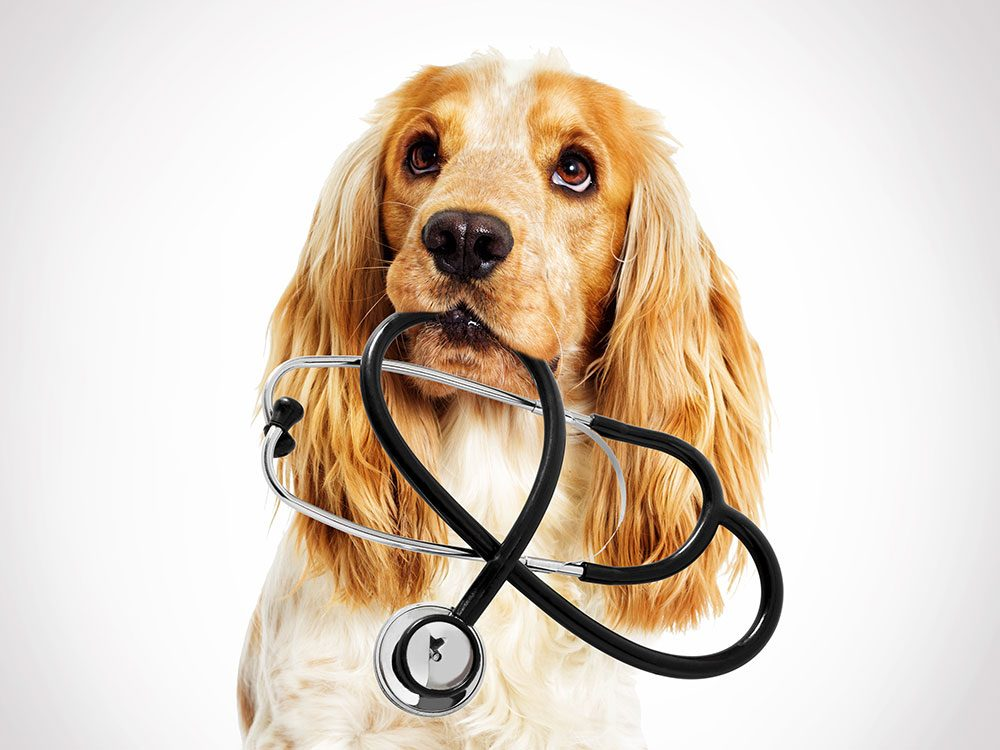 Bring your dog's health records on a road trip