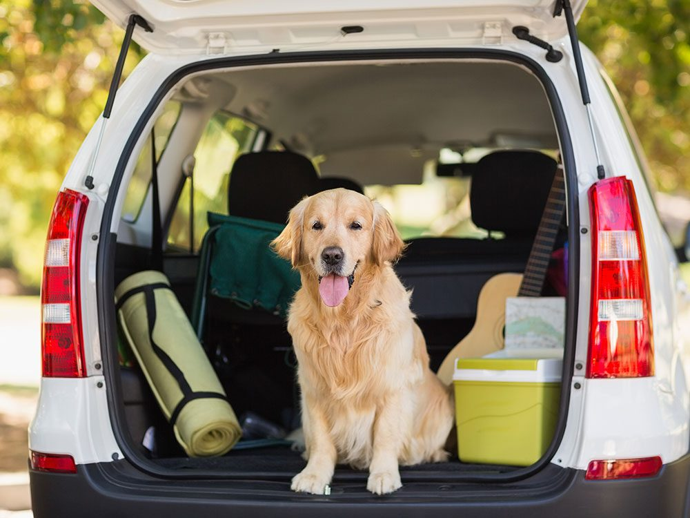 Tips for bringing your dog on a road trip