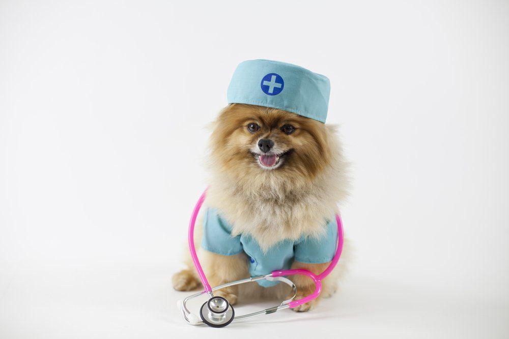 Nurse hound