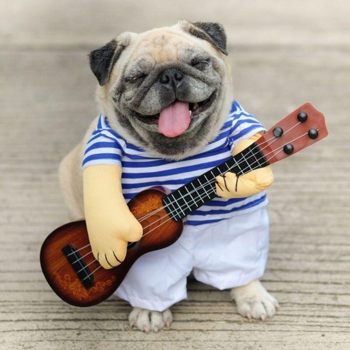 Dog wearing guitar