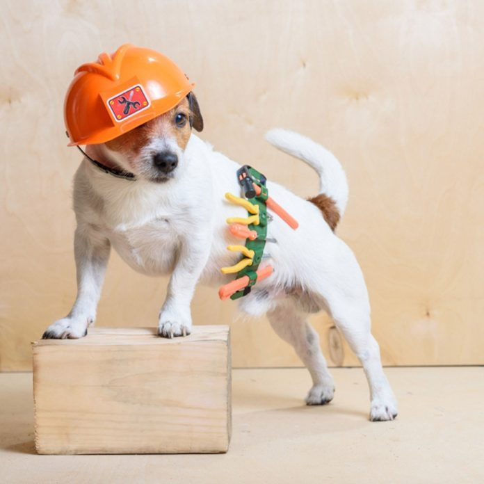 Dog dressed as construction foreman