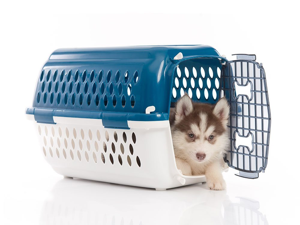 Secure the dog in its carrier on a road trip