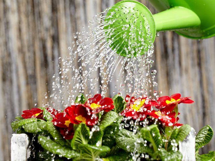 Urban gardening - don't over-water your plants