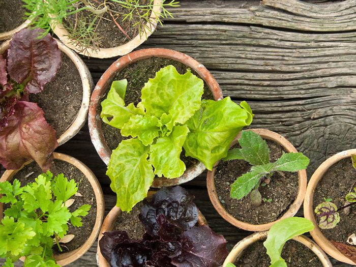 Urban gardening - give your plants space