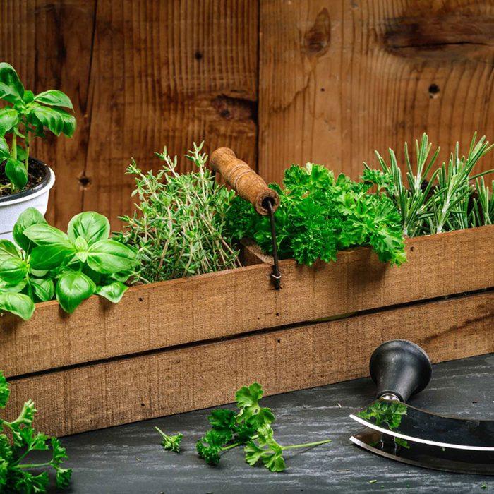 Urban gardening - herb garden