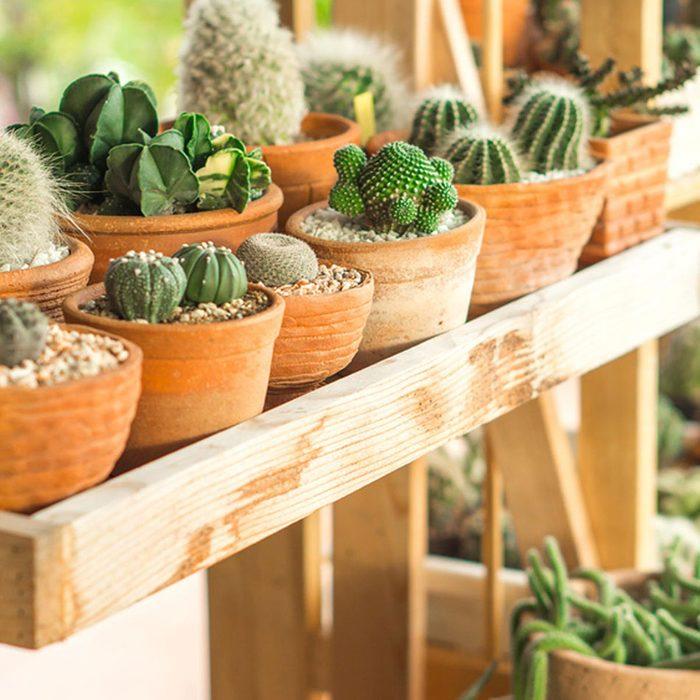 Urban gardening - plant shelf