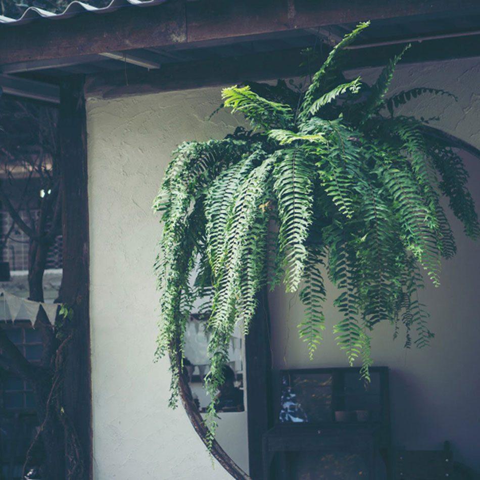 Urban gardening - shady balcony garden