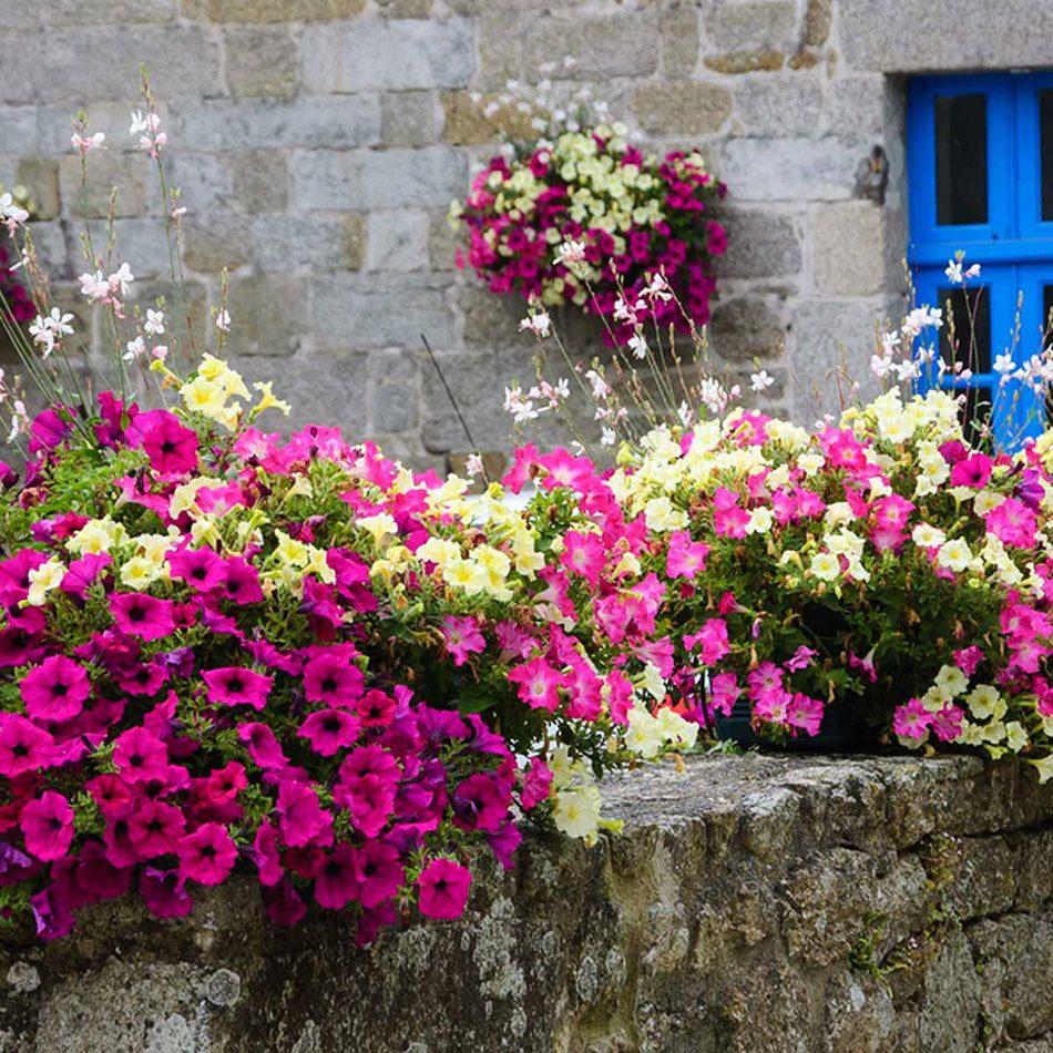 Urban gardening - sunny balcony garden