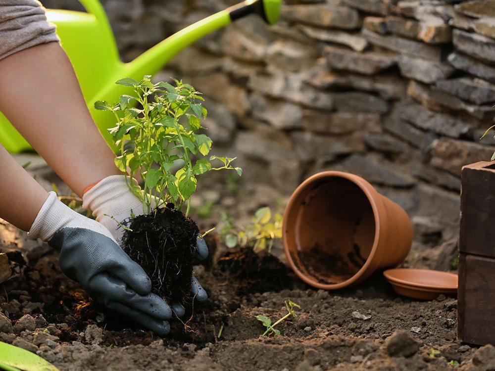 Uses for bleach - clean flowerpots