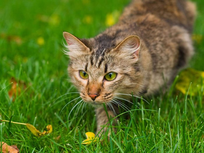What to do with old oranges - keep cats off your lawn