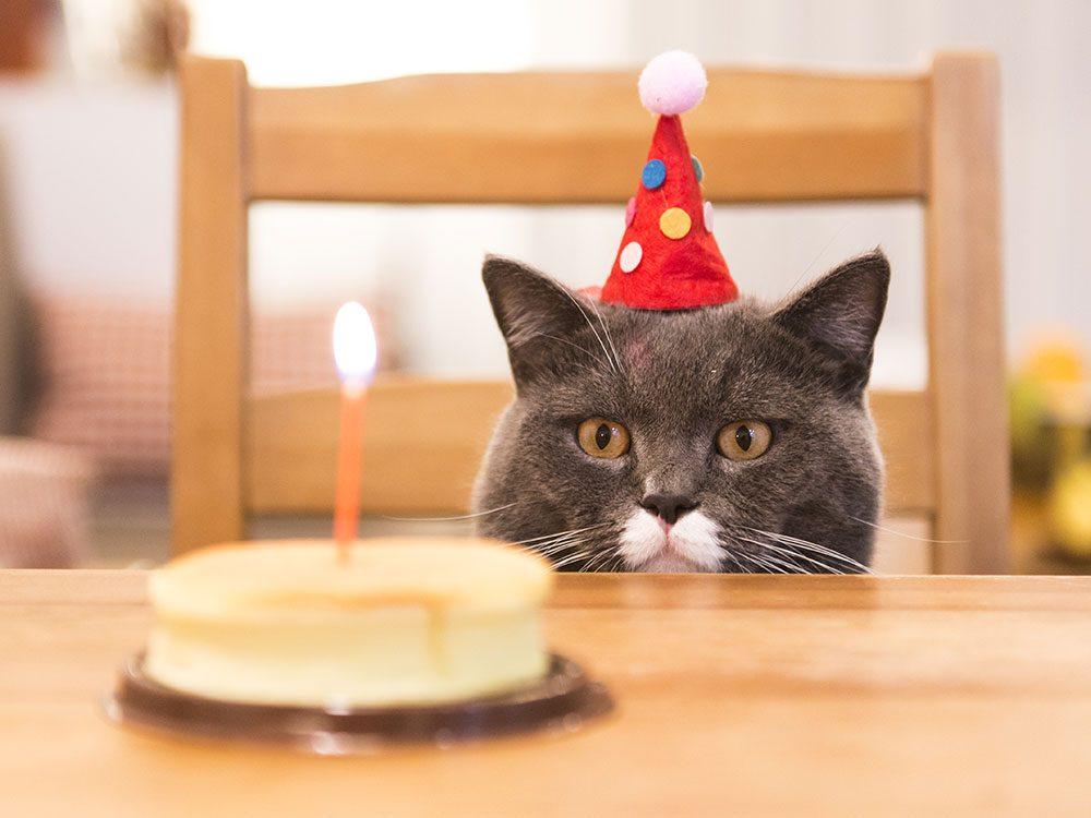 Birthday jokes - cat birthday