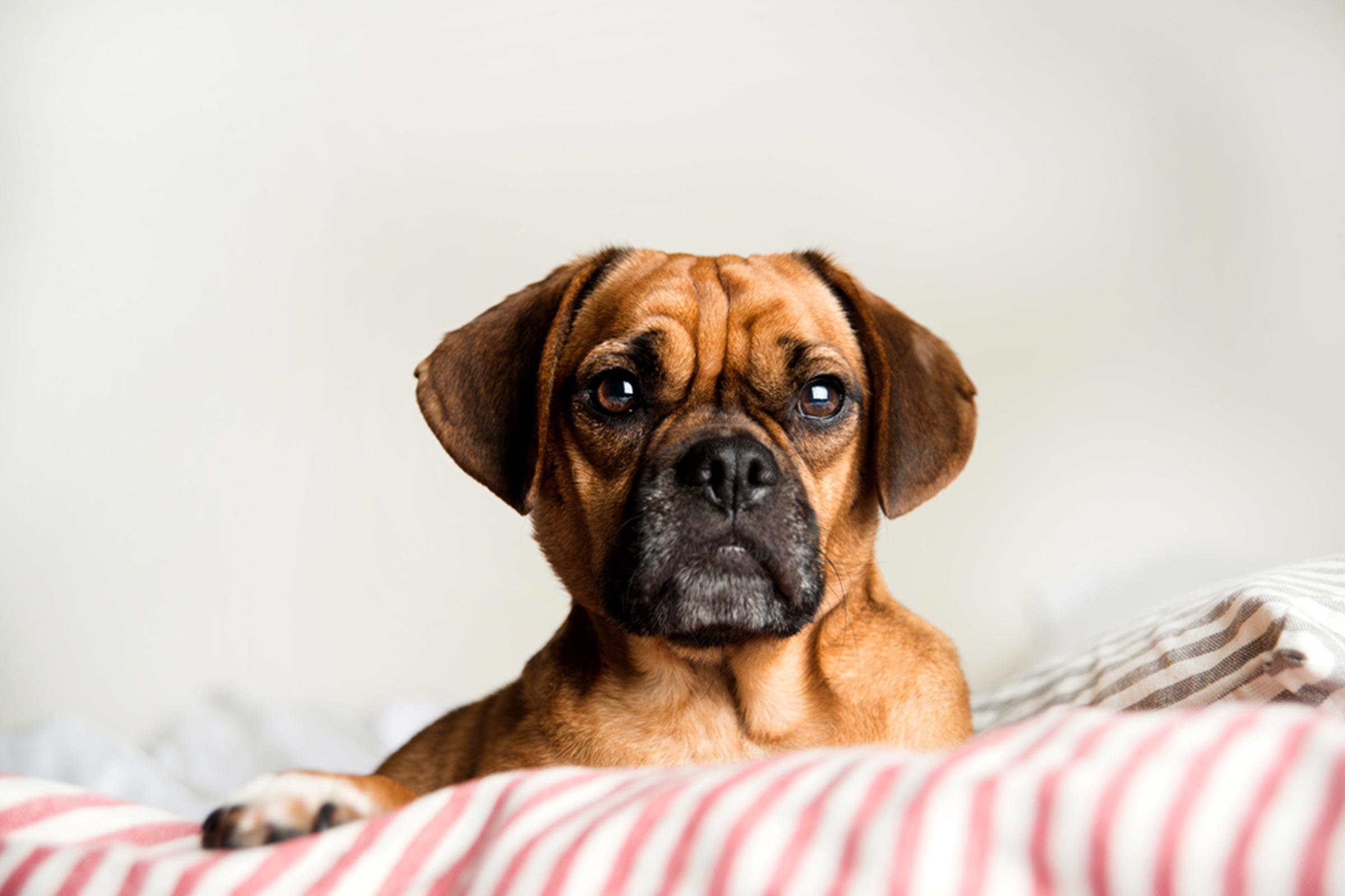 dog bed sheets