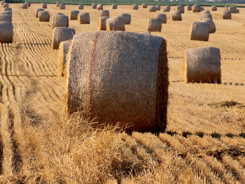 Giant hay stacks