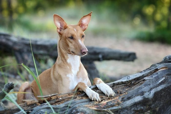 Beautiful dog portrait in nature