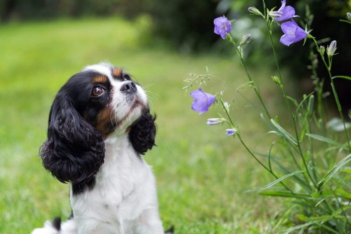 Cute dog looking at the flowers in the garden