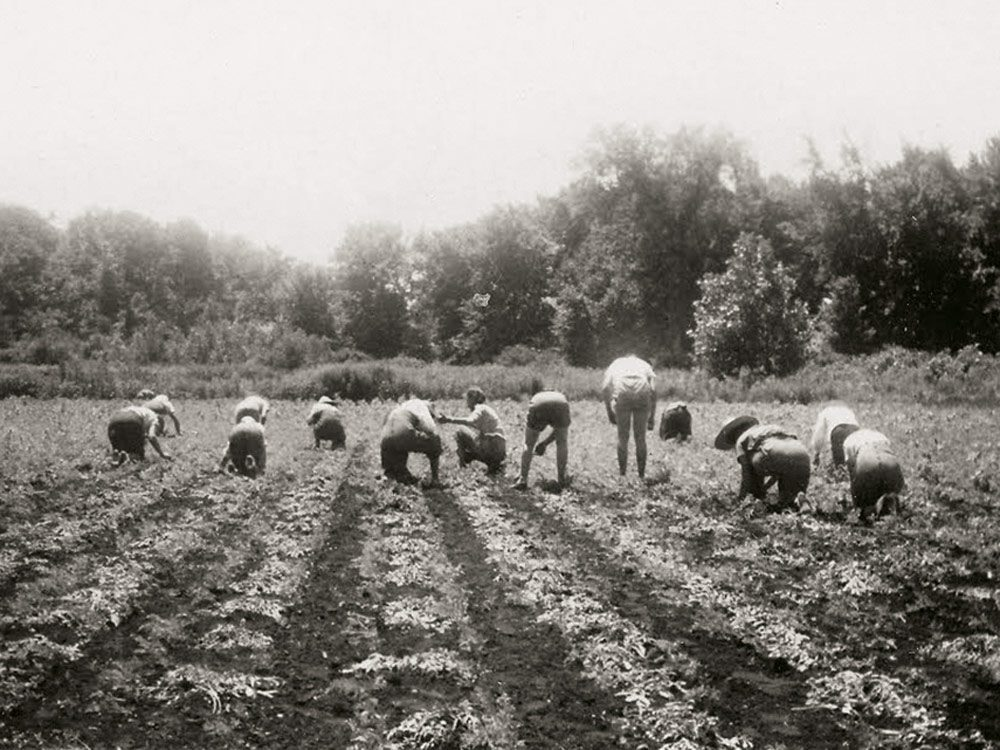 Farmerettes working in the onion fields in the Thedford Bog
