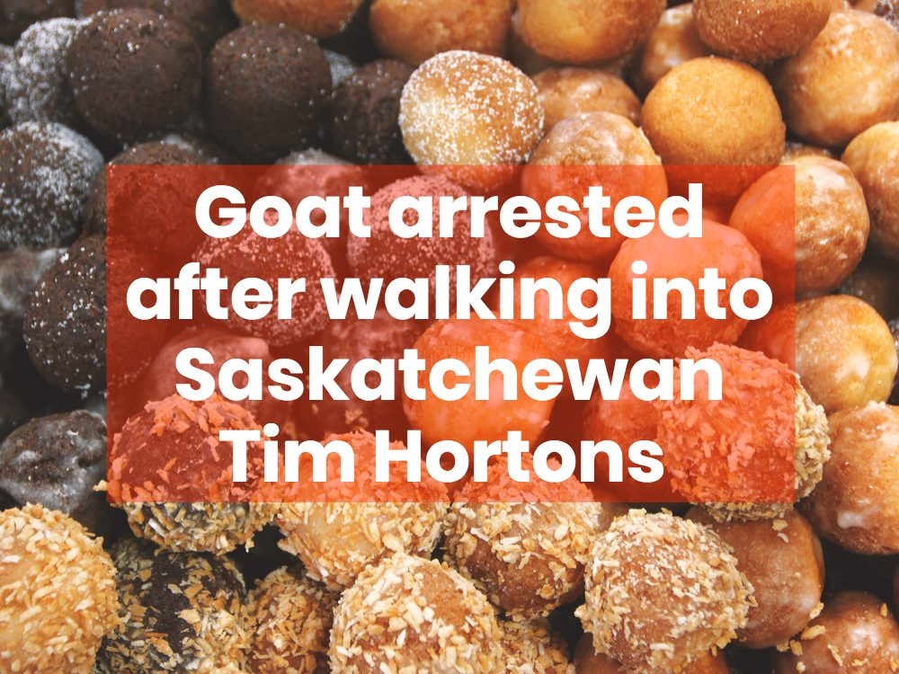 Tim Hortons timbits (donut holes)